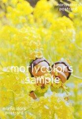 Morlycolors ポストカード 22
