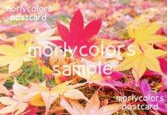 Morlycolors ポストカード 1
