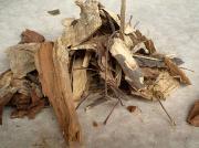 インドセンダンの樹皮