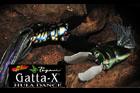 GATTA-X HURA DANCE