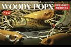 WOODY POP-X