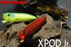 ツネミ限定(SP-C) XPOD Jr.