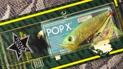 POP-X (SP-C) SS LAM POP