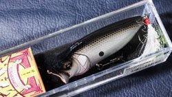 魚矢逆輸入 POP-MAX (USA) OZARK SHAD
