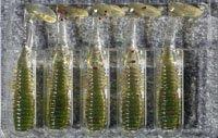 礁楽ROCKY FRY 1.5inch VIB-TAIL オリーブレッドフレーク