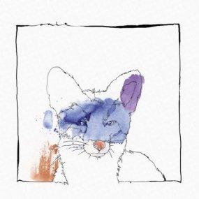 Nico Stojan -Cardano EP