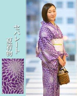 N1802 紫地菊