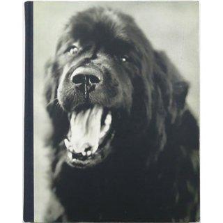 Gentle Giants: A Book of Newfoundlands ジェントル・ジャイアンツ