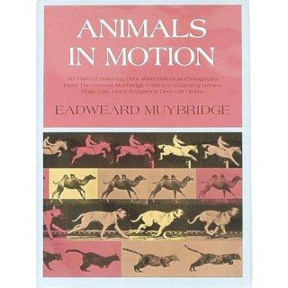 Animals in Motion アニマルズ・イン・モーション