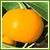 柑橘(カンキツ)