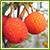 イチゴの木