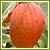 南国の果樹苗
