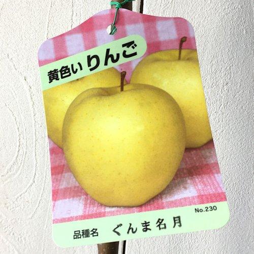 リンゴ 苗木 ぐんま名月 13.5cmポット苗 りんご 苗 林檎