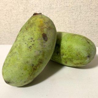 ポポー 苗木 実生苗 10.5cmロングポット苗 ポポー 苗