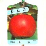 リンゴ 苗木 秋映 13.5cmポット苗 あきばえ りんご 苗 林檎
