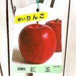 リンゴ 苗木 紅玉 12cmポット苗 こうぎょく りんご 苗 林檎