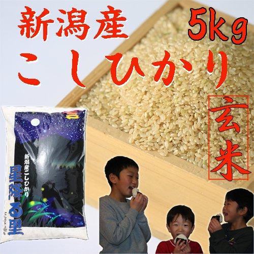 コシヒカリゴールド5kg(玄米)「29年産 新米」