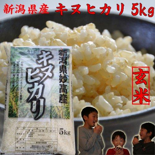 キヌヒカリ5kg(玄米)「28年産 新米」