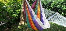 Rainbow in mother (レインボーインマザー)