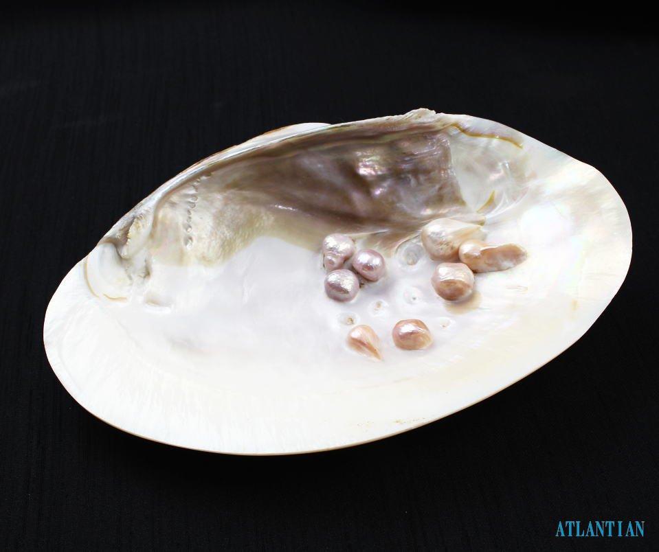パールシェル(イケチョウガイ)〜真珠付き浄化皿