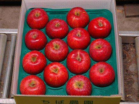 北斗  販売終了いたしました。  当店の人気NO1商品  りんご界の鬼っ子。最高の食味。。画像2