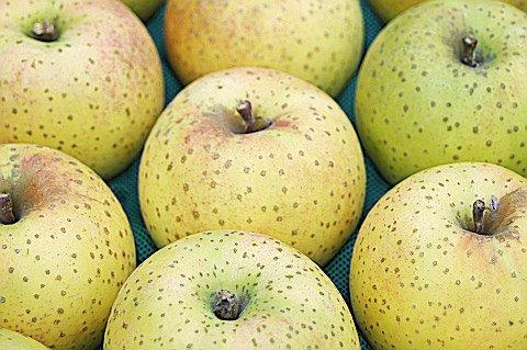 王林(おうりん) 販売終了しました。  黄色リンゴの定番 酸味無く柔らかめの肉質でファン多 約16個〜18個詰め画像2