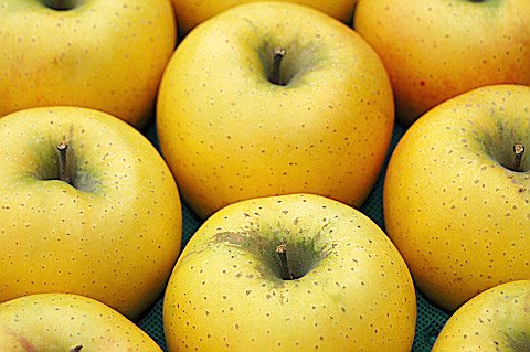 シナノゴールド この品種は年を越してからとなります。 「カリッとした硬い肉質」と甘酸適和で注目のりんご画像4