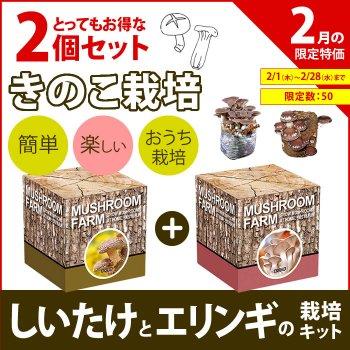 【2月特価】【得セット】 しいたけ と エリンギ の 栽培キット 2個セット
