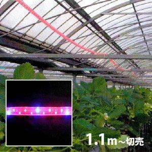 植物育成LEDロープライト[赤・青](防滴)電源セット込 切売り■直送■