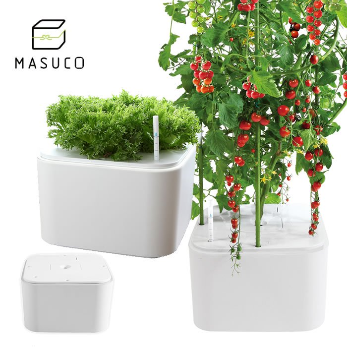 MASUCO