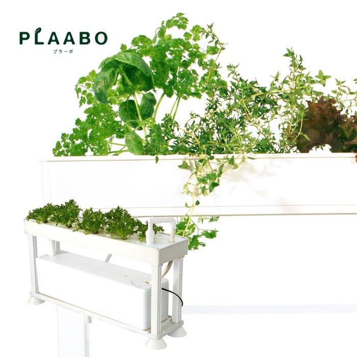 PLAABO