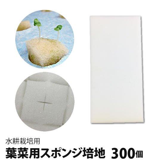 葉菜用培地(スポンジ)300個