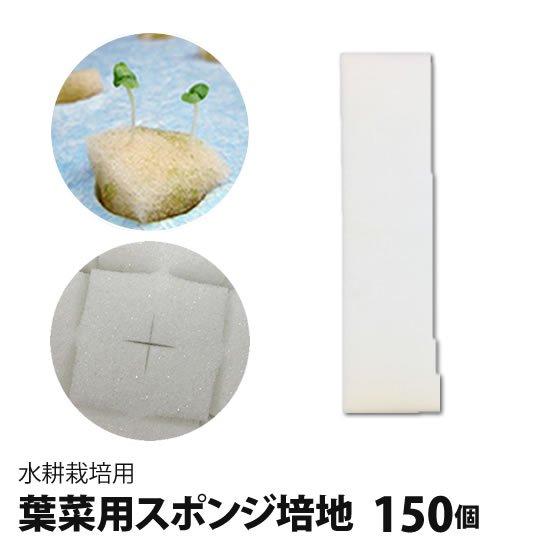 葉菜用培地(スポンジ)150個