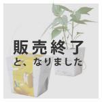 【販売終了】ベジコンテナ(パプリカ)
