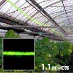 防虫用LEDロープライト [黄緑](防滴)電源セット込 切売り■直送■
