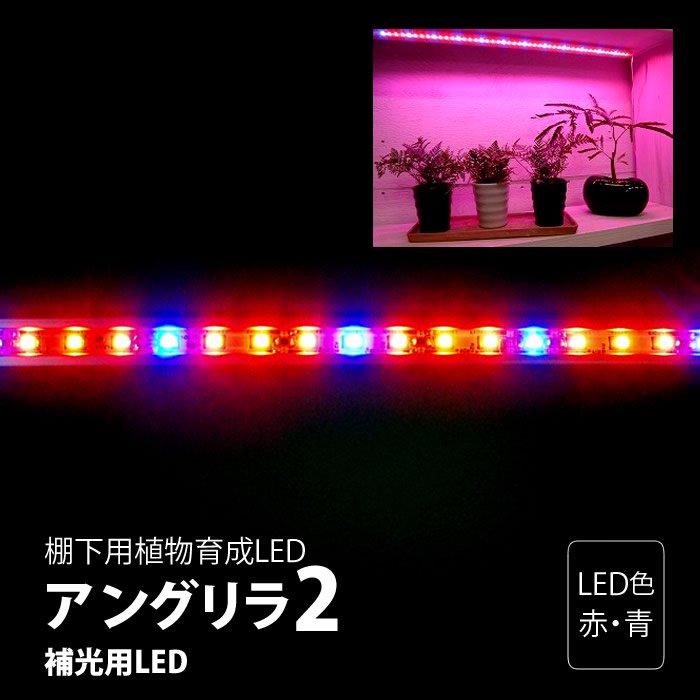棚下用植物育成LED アングリラ2