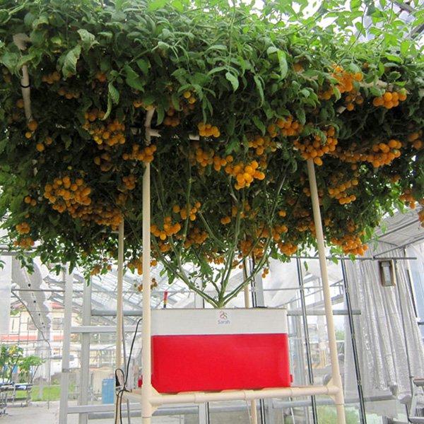 水耕栽培キット・ホームハイポニカSarah(サラ)オレンジ【在庫限りで販売終了】