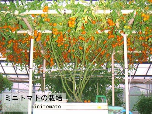 水耕栽培キット ホームハイポニカ303