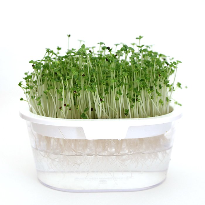 有機種子 ブロッコリー<スプラウト> 小袋 S(14g)