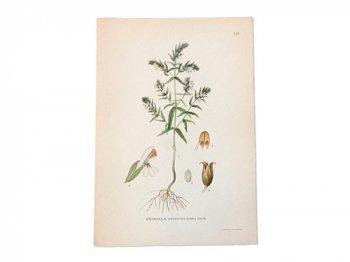 古い植物解剖図 119
