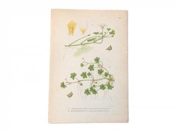 古い植物解剖図 167