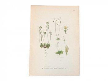 古い植物解剖図 210