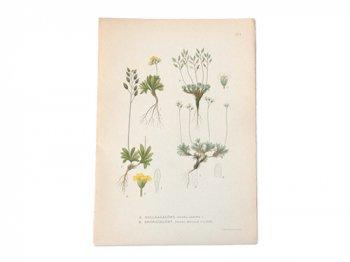 古い植物解剖図 211a