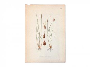 古い植物解剖図 430