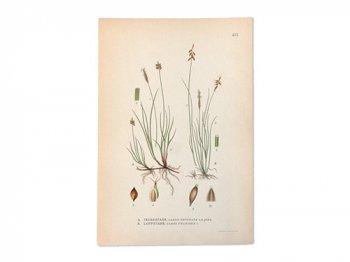 古い植物解剖図 431