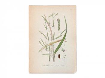 古い植物解剖図 450