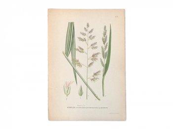 古い植物解剖図 473