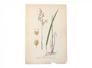古い植物解剖図 475