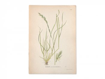 古い植物解剖図 478